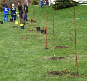 planting trees for Leaf a Legacy in West Seneca