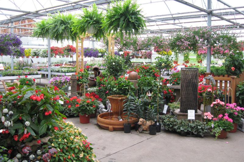 plants in Zittel's Country Market