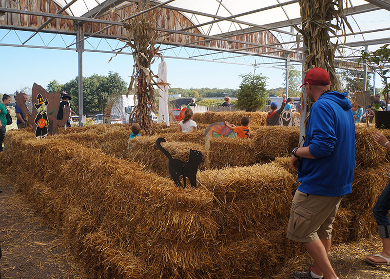 autumn maze of straw bales at Zittel's