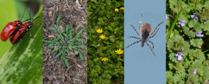 pest and weeds in spring