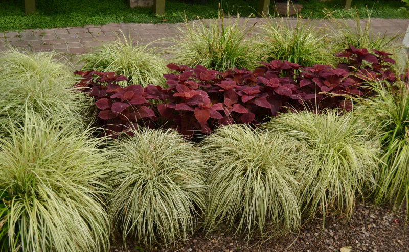grass and coleus planting at the Buffalo Erie County Botanical Gardens