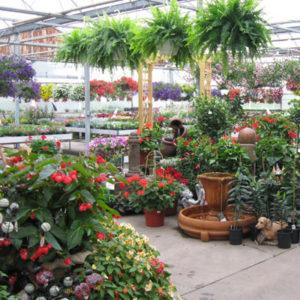 plants at Zittel's in Hamburg NY