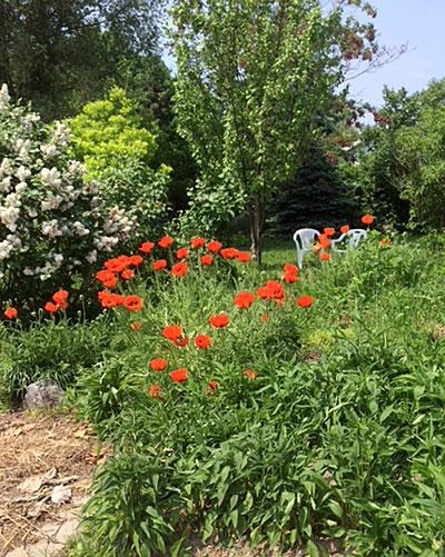 Garden on the East Side of Buffalo