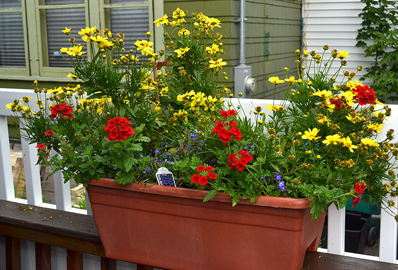 container of flowers on deck railing