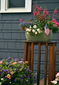 group of containers of annuals