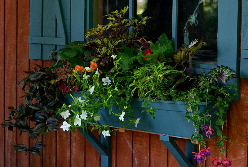 colorful window box in shade