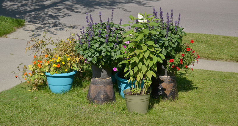 back of container garden