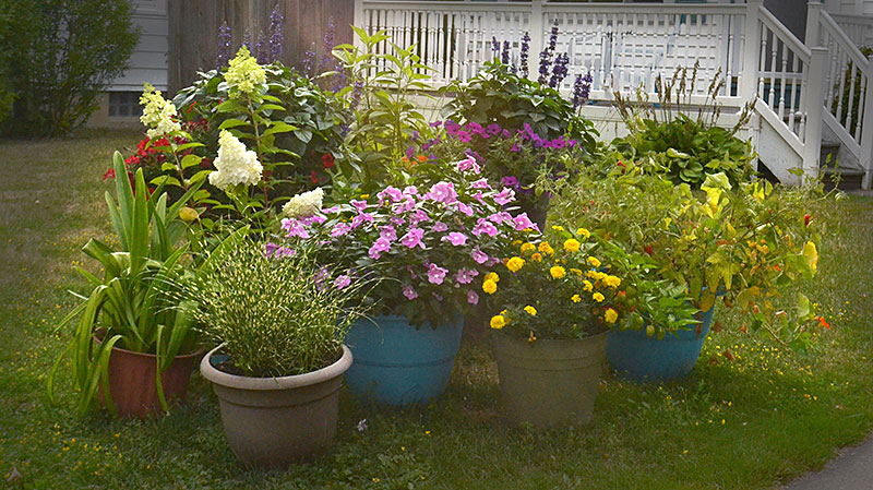container garden with flowers and vegetables