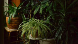 houseplants in Amherst NY