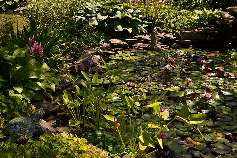 pond with water lilies in Hamburg