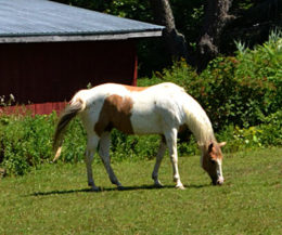 horse in Western New York