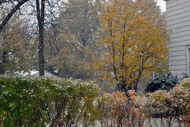 lake effect snow fall leaves Amherst NY