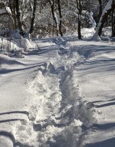 snow in Losson Park in Cheektowaga