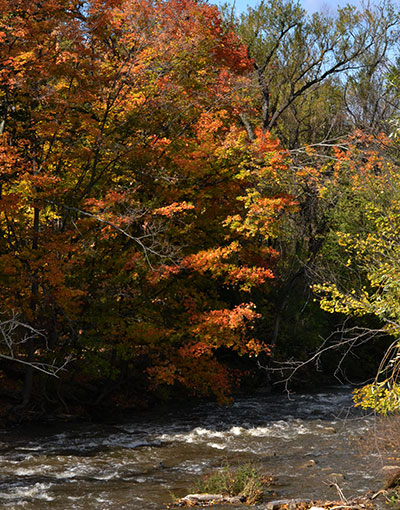 trees on creek in autumn in Amherst NY