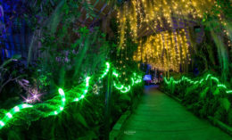 Lumagination at Buffalo and Erie County Botanical Gardens