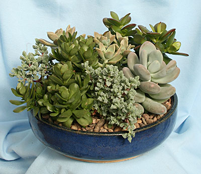 succulent garden from Mischler's in Williamsville NY