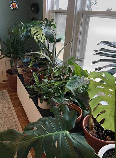 houseplants in Buffalo NY
