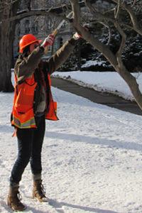 pruning oak tree in winter
