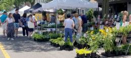 vendors at Lewiston GardenFest