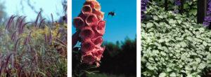 rye grass and foxglove 'Summer King' amd lamium 'White Nancy'