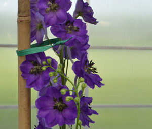flower twist tied to a stake