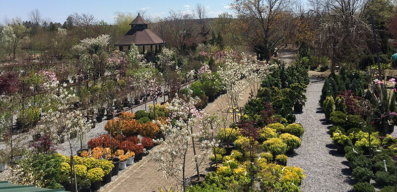 Garden Centre of Murray Bros. Nurseries in Orchard Park NY