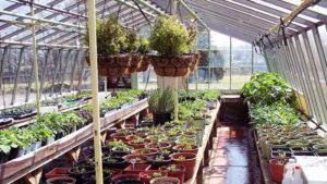 greenhouse of North Tonawanda Botanical Association