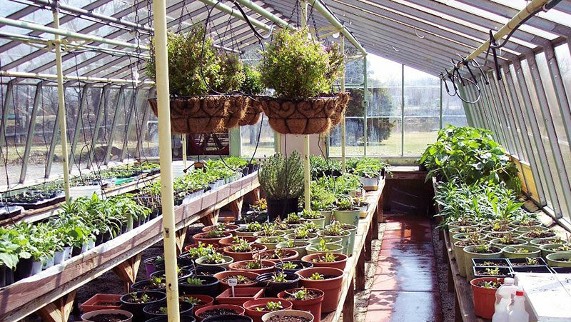 greenhouse of North Tonawanda Botanical Association