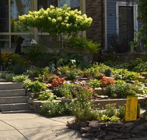 terraced front yard in Buffalo