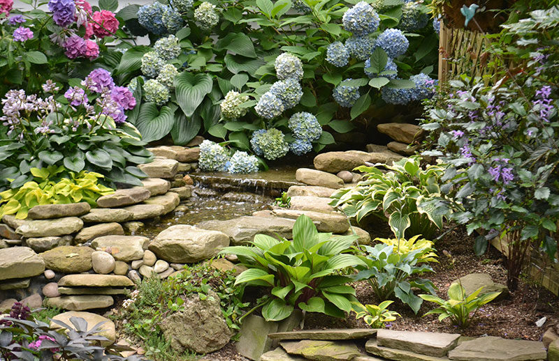 water feature in garden with hydrangeas