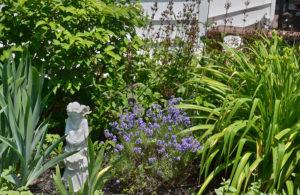 perennials in Grand Island garden