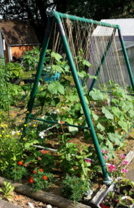 garden trellis from old swing frame