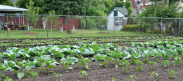 large vegetable garden on East Side of Buffalo