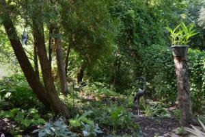 new shade garden after apple tree fell
