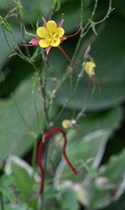yarn marking a particular plant
