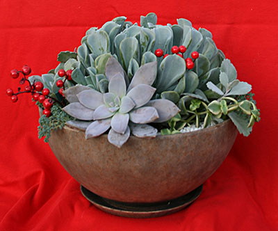 holiday succulent bowl by Mischler's
