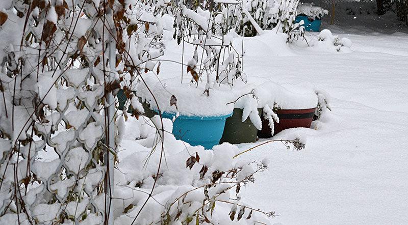 garden in snow by Stofko