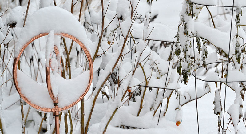snowy garden by Stofko