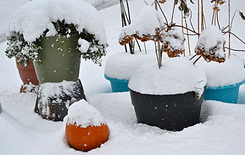 container garden in snow by Stofko