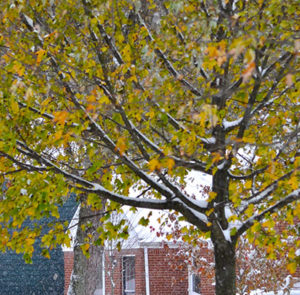 leaves on trees during snow by Stofko