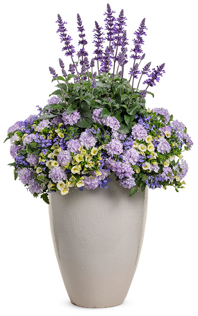 flowers with cool colors in a pot
