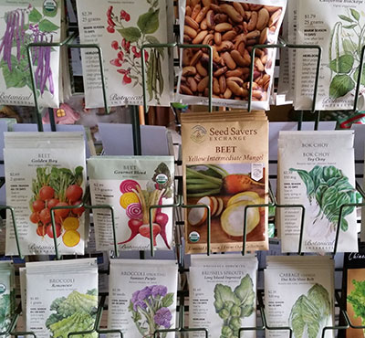 seeds at Urban Roots in Buffalo