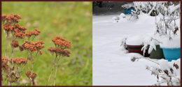snowless garden and snowy garden