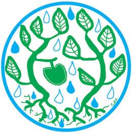 illustration of plants catching rainfall
