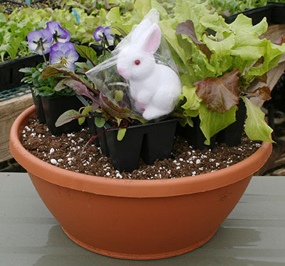 Easter Bunny Bowl kit at Mischler's