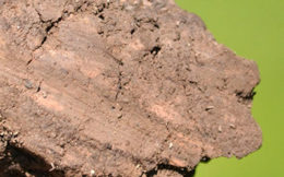 clay in soil