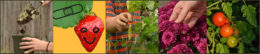 collage showing gardening resources