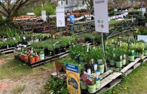 plants at Urban Roots in Buffalo NY