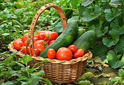 basket of vegetables in Western New York by Stofko