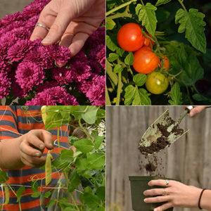 four gardening images